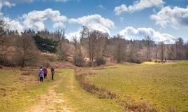 英国春天森林森林 库存照片