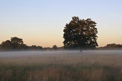 英国有雾的领域在冬天 免版税库存图片