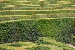 英国树篱迷宫 免版税库存照片