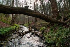 英国森林。 免版税库存照片