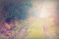 英国森林地在一个有雾的有薄雾的早晨 免版税库存照片