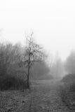 英国森林地在一个有雾的有薄雾的早晨 免版税库存图片