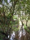 英国森林地树在森林在水中反射了 库存图片