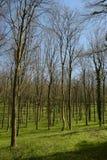 英国森林地 免版税图库摄影