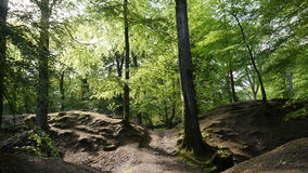 英国森林地 图库摄影