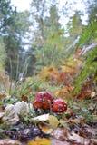 英国森林蘑菇 免版税库存图片
