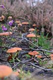 英国森林蘑菇 免版税库存照片