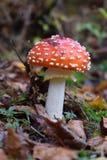 英国森林蘑菇 库存图片