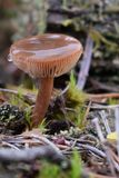 英国森林蘑菇 库存照片