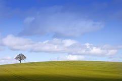 英国横向农村冬天 库存照片
