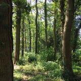 英国海滩树森林地 库存图片