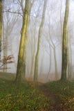 英国海滩森林地在一个有薄雾的早晨 免版税库存图片