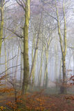 英国海滩森林地在一个有薄雾的早晨 免版税库存照片