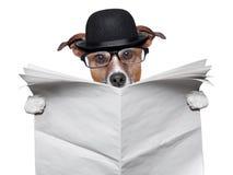 英国狗读书 图库摄影