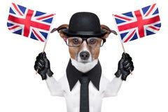 英国狗 免版税图库摄影