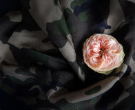 英国玫瑰紫色织品和背景 免版税库存图片