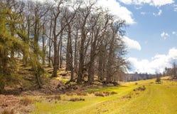 英国自然 苏克塞斯春天的公园 图库摄影