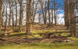 英国自然 苏克塞斯春天的公园 免版税图库摄影