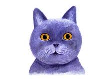 英国蓝色猫的画象 额嘴装饰飞行例证图象其纸部分燕子水彩 库存图片