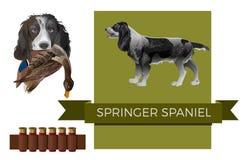 英国西班牙猎狗蹦跳的人 皇族释放例证