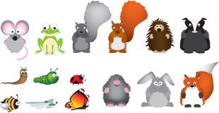 英国设置了英国野生生物 免版税库存图片