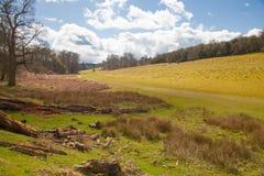 英国风景、森林和领域在春天 苏克塞斯 免版税图库摄影