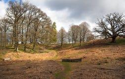 英国风景、森林和领域在春天 苏克塞斯 库存图片