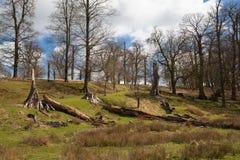 英国风景、森林和领域在春天 苏克塞斯 免版税库存照片