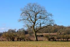 英国风景 免版税图库摄影