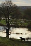 英国2014洪水 免版税库存照片