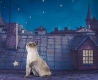 英国Shorthair在夜屋顶的猫夫妇 库存照片