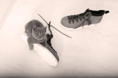 英国Shorthair婴孩和一双鞋 免版税图库摄影