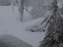 14英寸2008年10月28日的雪 图库摄影