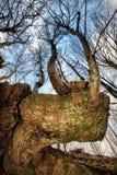 2英尺森林 免版税库存照片