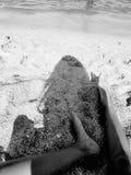 英尺沙子 免版税库存图片