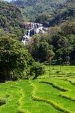 111英尺的Rathna埃拉,是第10最高的瀑布在斯里兰卡,位于在康提区 免版税图库摄影
