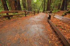 英尺路径走道在森林里 免版税库存图片