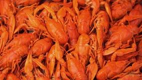英尺长度红色煮沸的小龙虾特写镜头在盘子转动 股票录像