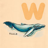 英语字母表,鲸鱼 免版税图库摄影