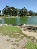 英里方形的公园 库存图片