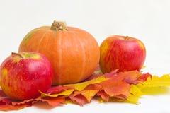 苹果、南瓜和叶子 库存图片