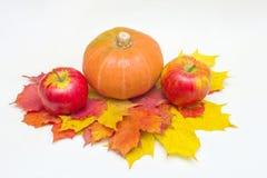 苹果、南瓜和叶子 库存照片