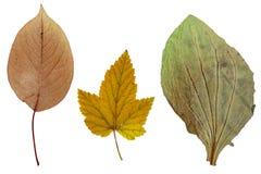 苹果、无核小葡萄干和大蕉叶子  免版税库存图片