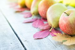苹果、梨和秋叶在木背景 秋天bac 库存照片