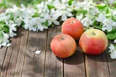 苹果三朵成熟苹果和花  背景棕色木 免版税库存照片