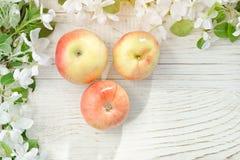 苹果三朵成熟苹果和花  背景空白木 免版税库存图片
