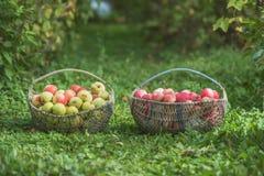 苹果两个篮子  免版税库存照片