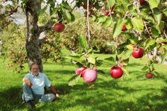 苹果人坐的结构树下 库存图片