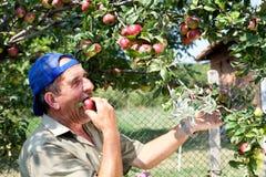 苹果农夫老果树园 图库摄影