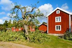 苹果切断的结构树 免版税库存图片